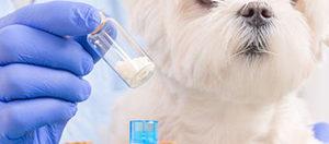 Регистрация ветпрепаратов. Услуги по регистрации ветеринарных препаратов в Рег Мед Сервисе. Регистрация ветеринарных препаратов в Кыргызстане